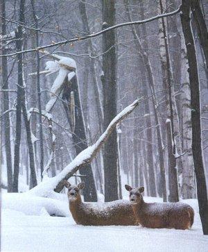 Wisconsin_deer